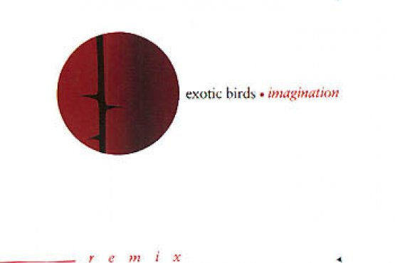 Exotic Birds - Imagination